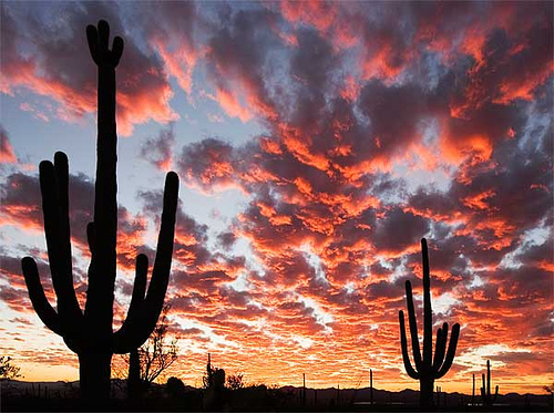 Tucson_sunset